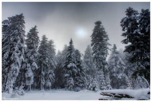 Frozen Veil by FlorentCourty