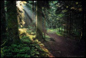 Morning Walk by FlorentCourty