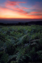Dusk from a fern field by FlorentCourty