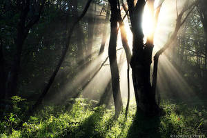 Morning Magic II by FlorentCourty
