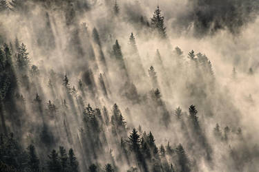 Steam Forest by FlorentCourty