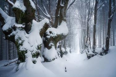 Giants in Winter by FlorentCourty