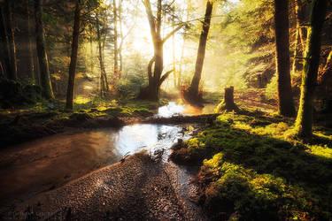 Shiny Morning by FlorentCourty