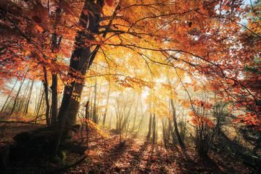 Radiance by FlorentCourty
