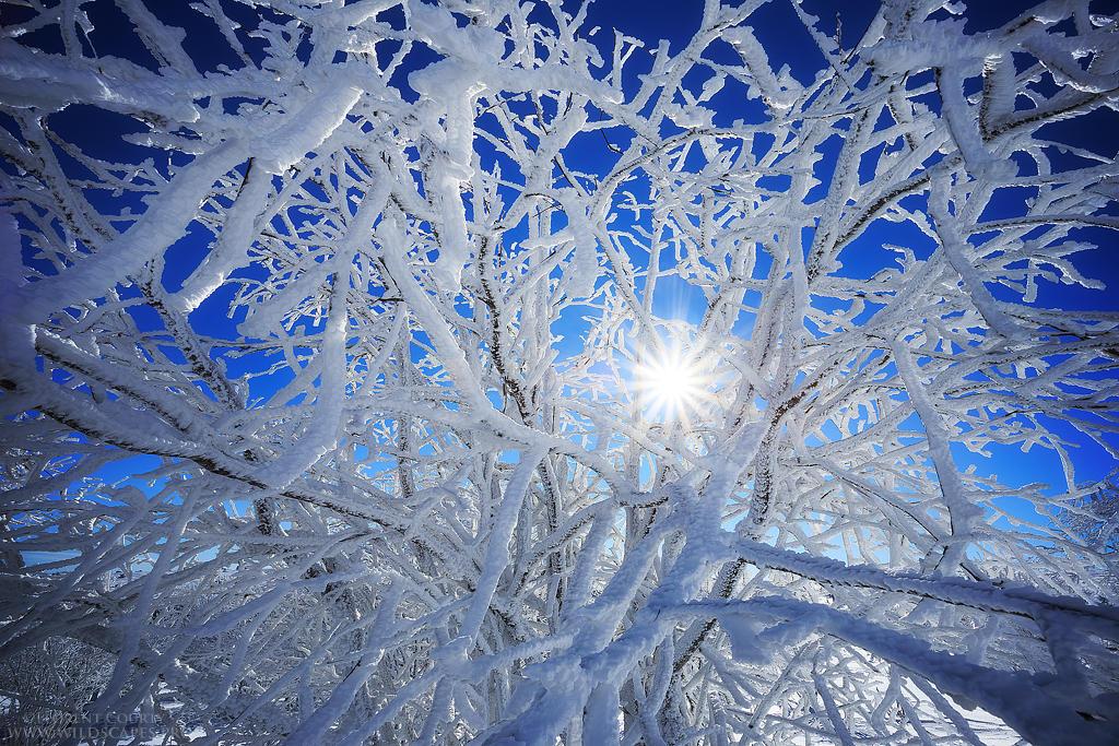 Icy Days by FlorentCourty