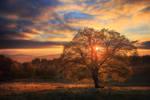 Avatar of Autumn by FlorentCourty