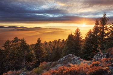 Veil of Gold by FlorentCourty