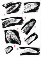 A Study of Wings by SecndLogic