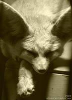 Fennec fox: Sleeping cuteness by Allerlei