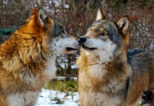 Kiss me gently by Allerlei