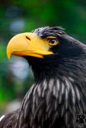 Yellow beak by Allerlei