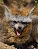 Yawning foxie by Allerlei