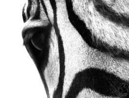 Eye of the Zebra by Allerlei