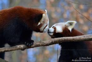 Just a little kiss by Allerlei