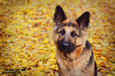 Autumn Triss by Allerlei