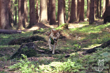 Hunteress by Allerlei