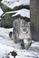 On a snowy walk by Allerlei