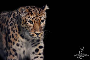 Kiara in the darkness by Allerlei