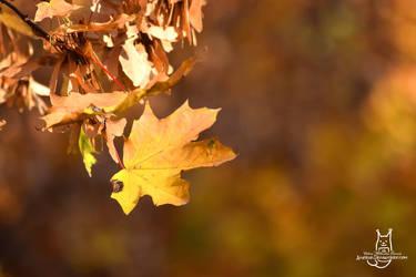 Autumn feeling by Allerlei