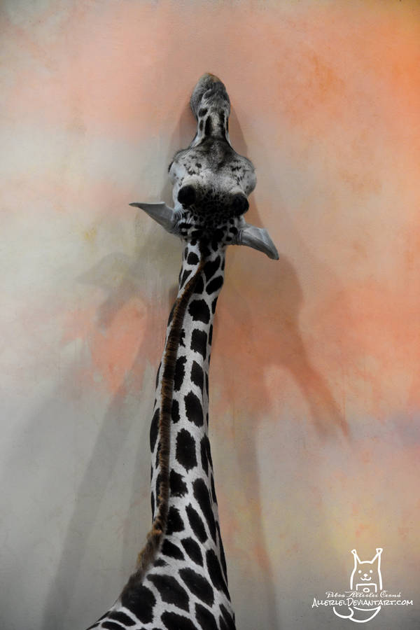 Giraffe with a dragon shadow by Allerlei