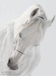 white stallion by mari-mi
