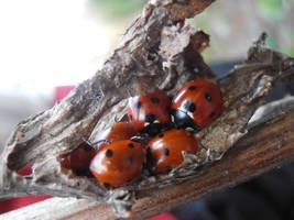 Ladybird hidout by Chocolatesundae123