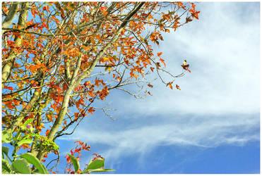 Autumn by Plornt