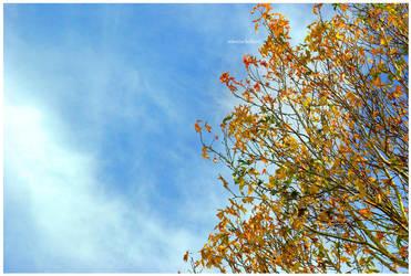 Golden Heights by Plornt