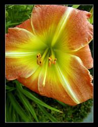 Flower by Plornt