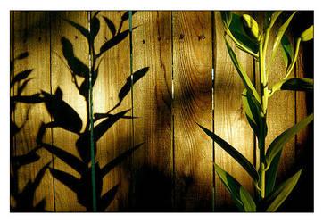 Plant by Plornt