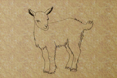 #5 Goat by sebyZart