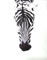 Zebra by watermonster