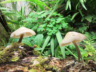 Fungi 2 by buttercupminiatures