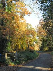 Autumn lane by buttercupminiatures
