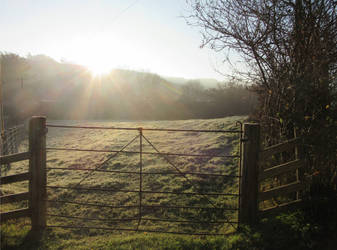 Frosty morning by buttercupminiatures