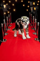 Wolf Link on the Red carpet at CF 2012 by Inu-Sama