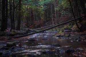 September Forst 5 by Salamander-Stock
