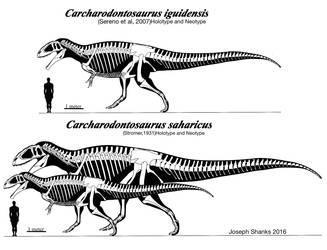 Carcharodontosaurus by PaleoJoe