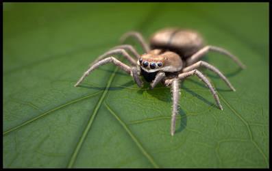 CGI Spider by Amras-Arfeiniel