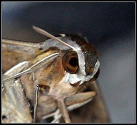 Moth by zx14
