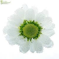 Waterflower by LadyCarnal