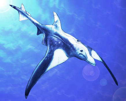 Dolphin Ray by thomastapir