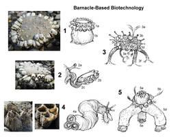 Barnacle-Based Biotech Batteries by thomastapir