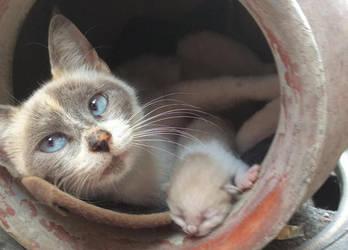 Missie Cat by Mahali16Lopez
