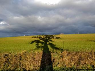 I am a tree by jochniew