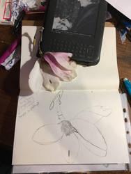 Drawing of my magnolia flower   by doreenpayne