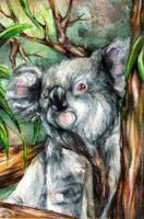 Koala Bear by L-H4x3D