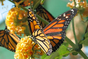Butterfly Effect by Egil21