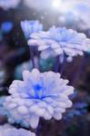 Blue Magic by Egil21