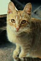 Kitty by Egil21